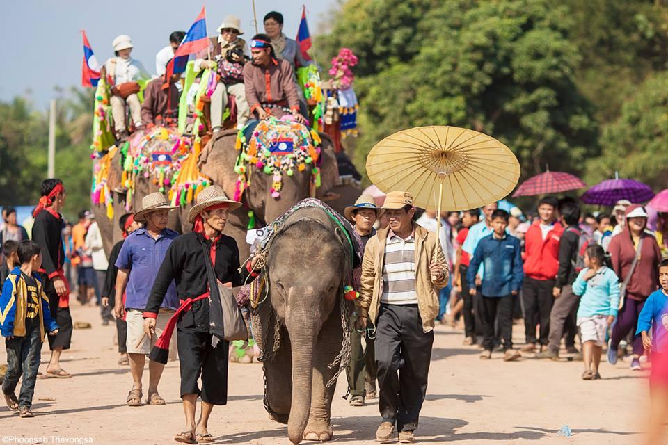 Elephant_Festival_2014
